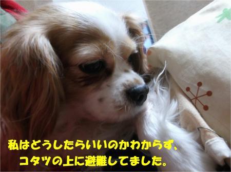 07_convert_20141218172943.jpg