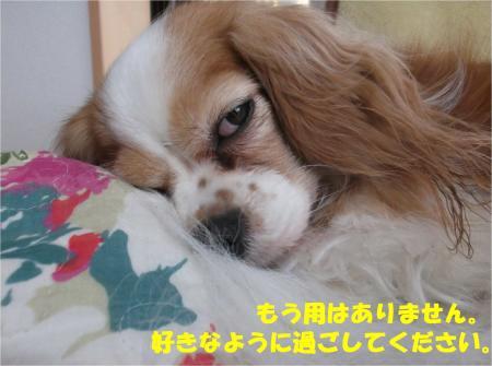 09_convert_20141201173429.jpg