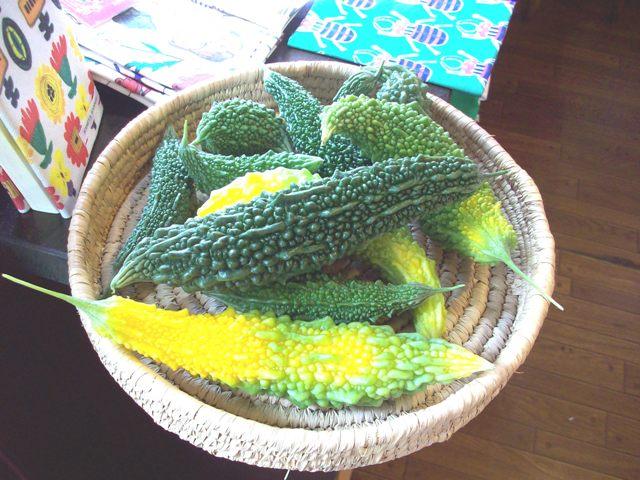 今日の収穫。
