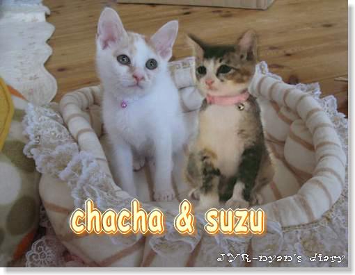 chachasuzu120813