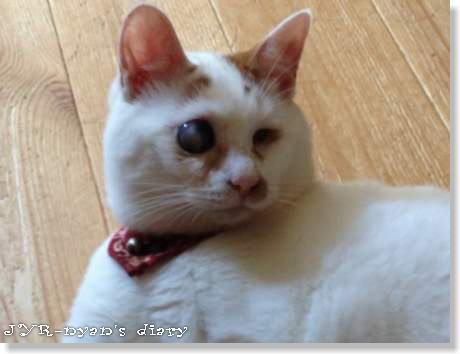 daichi120801_4