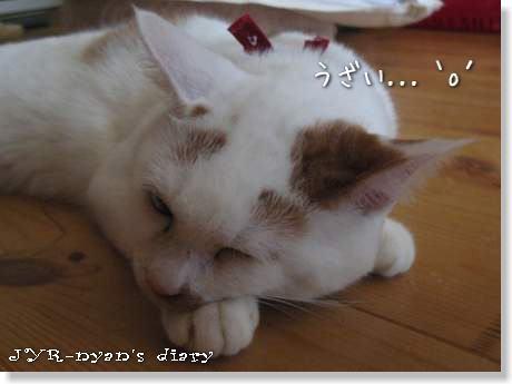 daichi120913_2