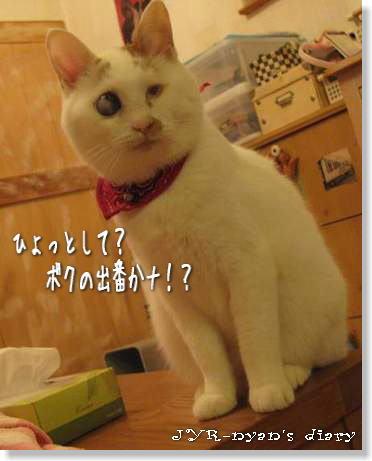 daichi120930
