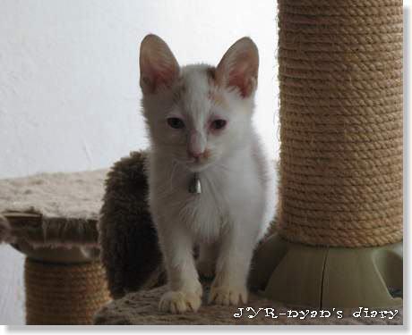 daichi121004_5