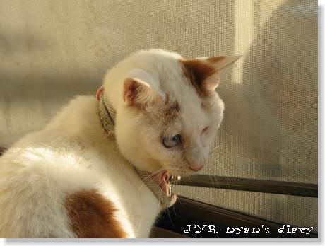 daichi121004_7
