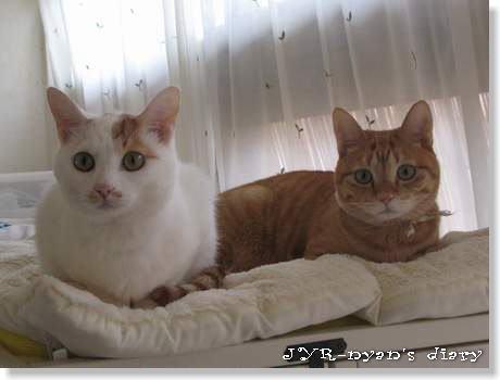 goeichi120427