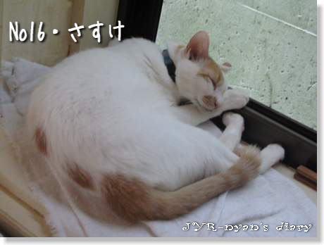 sasuke120913