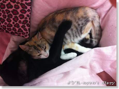 shinamon130106_2