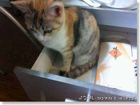 shinamon130106_3