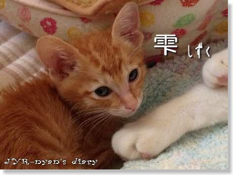 shizuku121107