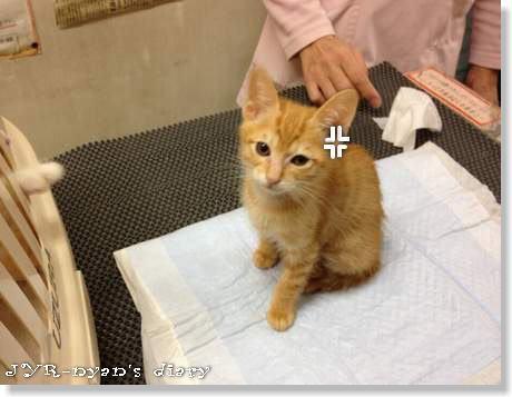shizuku121123