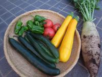 野菜0726小