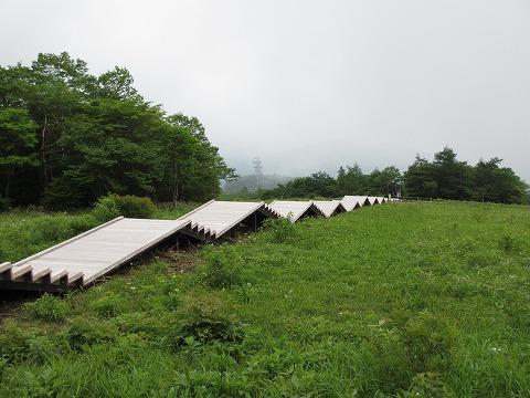 2012_0623kisuge0014.jpg