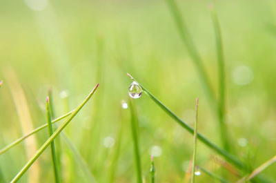 water-drop-on-grass.jpg