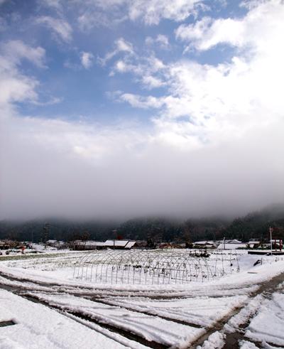 20121115hatsuyuki.jpg