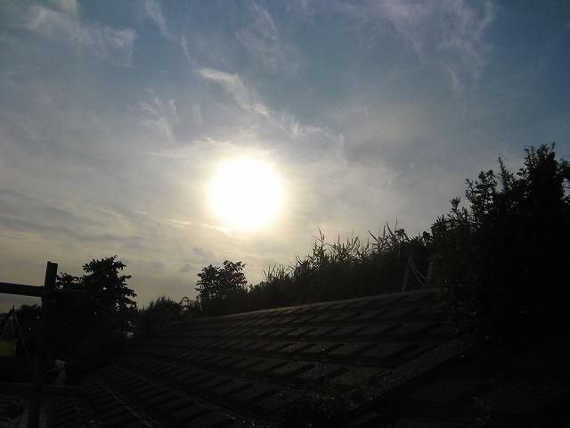 SANY0174.jpg