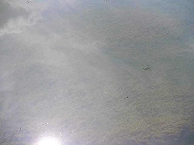 SANY0201_20120813210612.jpg