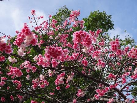 DSC01416 - 桜