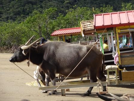 DSC01627 - 水牛車