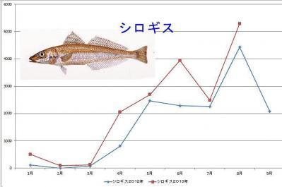 シロギスグラフ