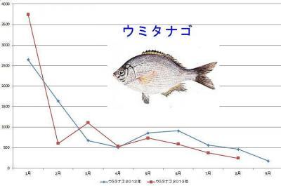 ウミタナゴグラフ
