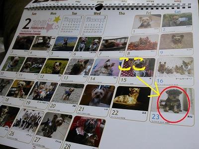 ヨーキーカレンダー