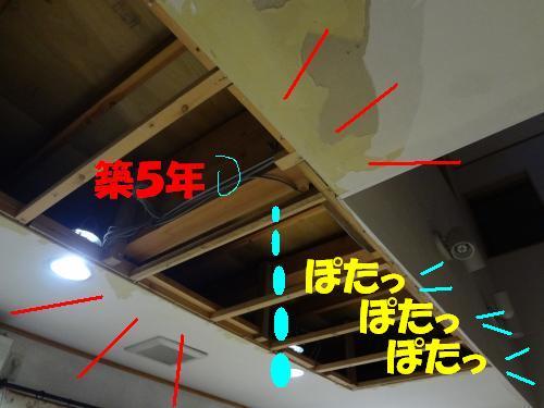 DSC00237_convert_20120703231525.jpg