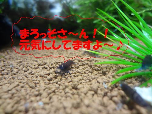 DSC00343_convert_20121028232651.jpg