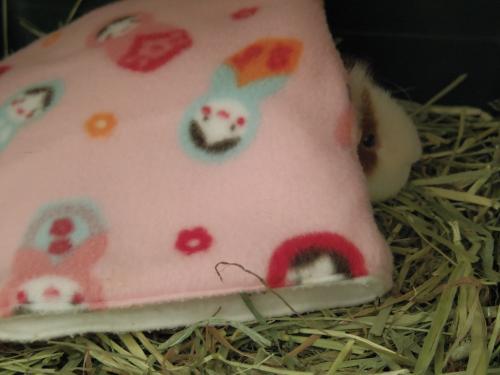 寝袋事情4