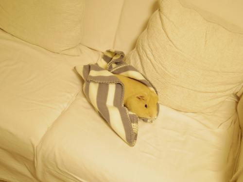新しい毛布1