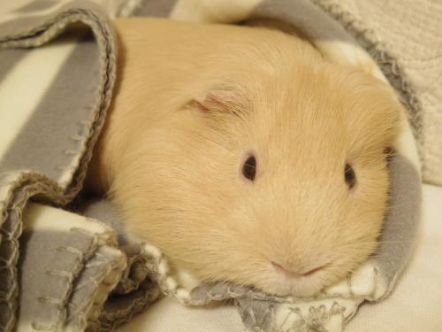 新しい毛布2