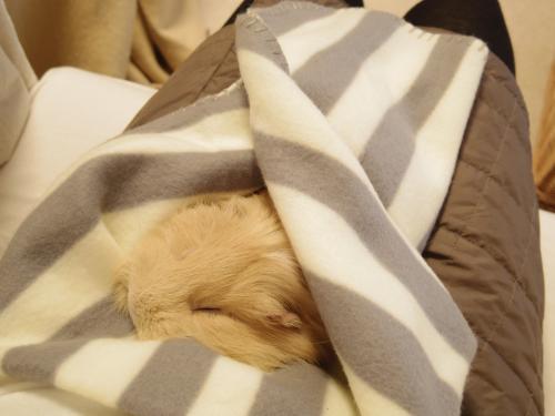 新しい毛布4