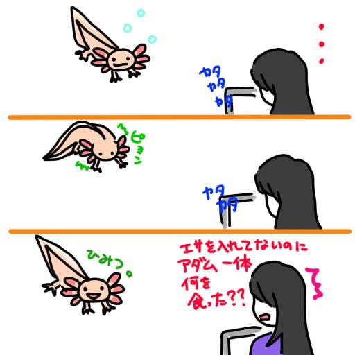 20120808妄想エサを食べるウパ