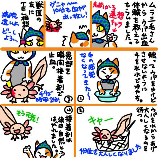 20121125ムラ三毛さんのウパ出血治療体験記