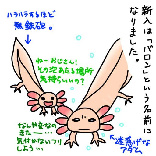 20121221新入の名前は「バロン」です