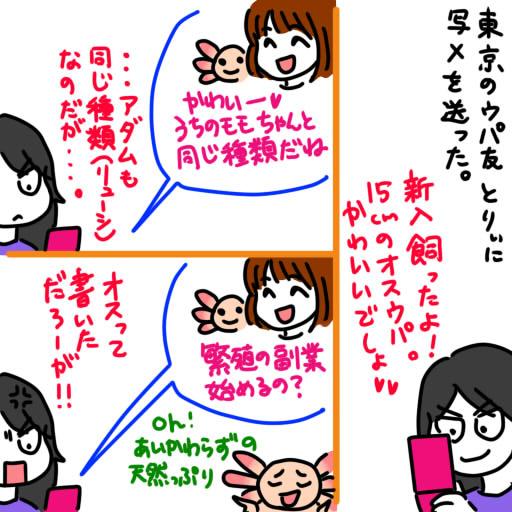 20121225ウパ友とりぃからのメール