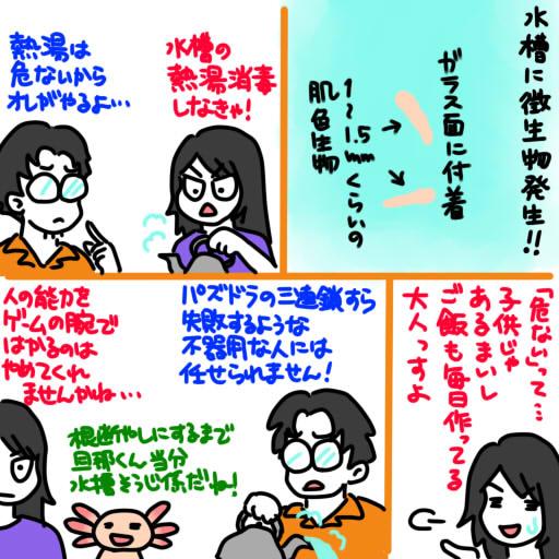 20130627水槽に微生物発生!!