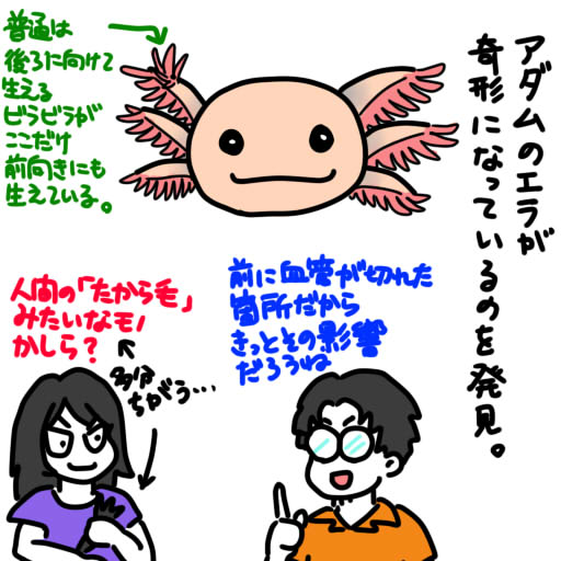 20130718アダムの個性的なエラ