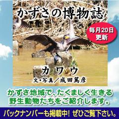 kazusa2014-01.jpg