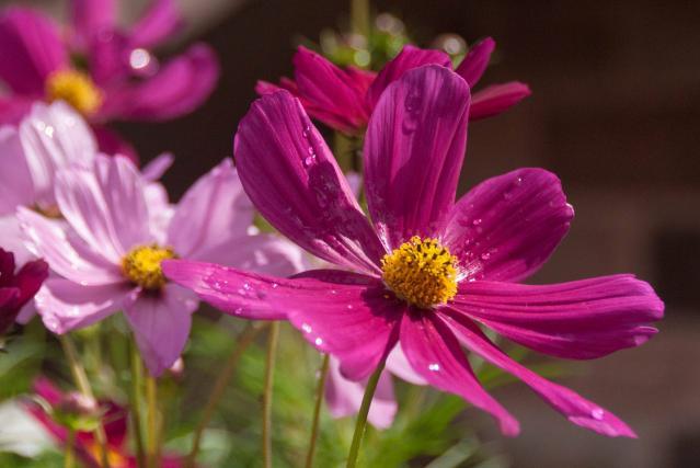 オルゴールの森の花々