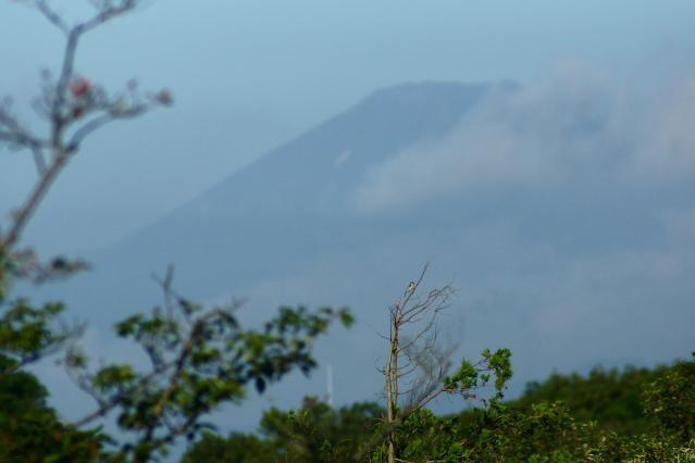 富士山とシジュウカラ