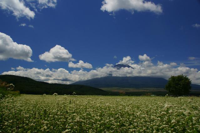 蕎麦と富士山