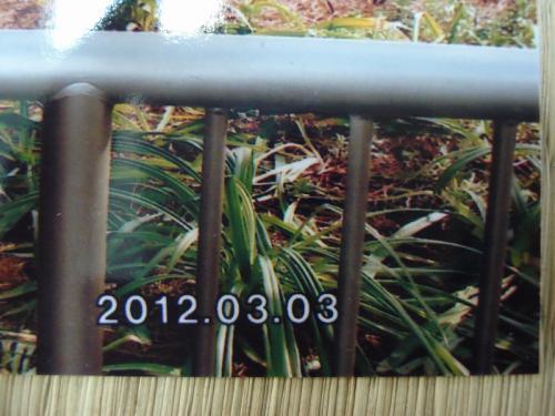 120615ネットプリントジャパン-4