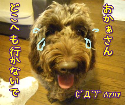 20121017_05.jpg