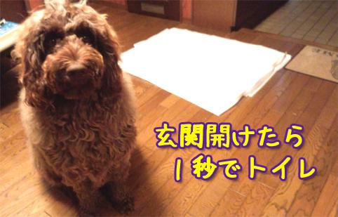 20121018_01.jpg