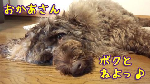 20121107_02.jpg