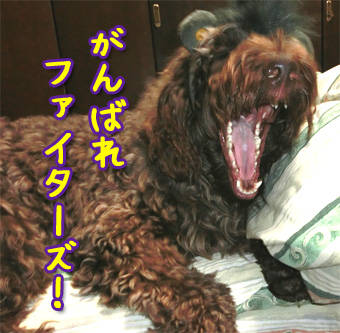 20121107_04.jpg