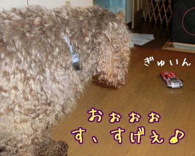 20121123_05_20121122185434.jpg