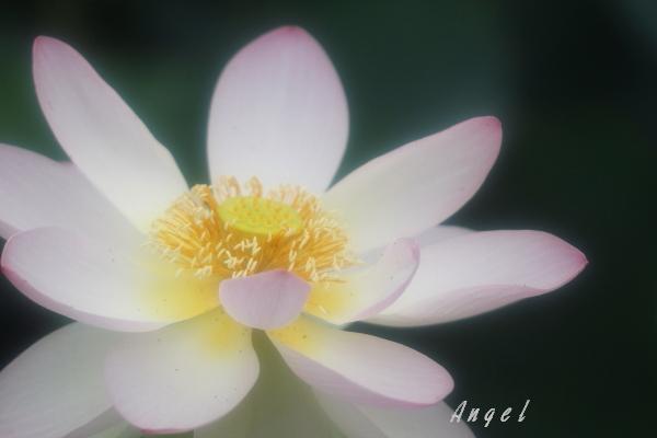 甲斐姫(201307132160)