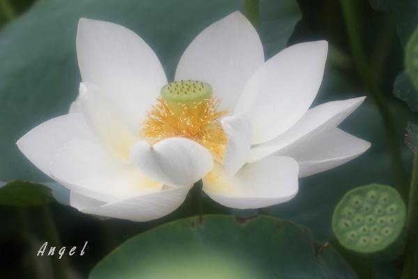 西光寺白蓮(201307132181)